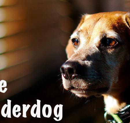 I Love Being the Underdog